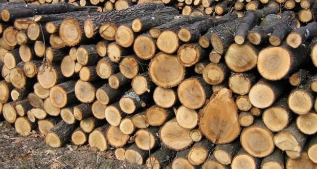 Ultima declaraţie a primarului Virgil Popa cu privire la lemnele de foc pentru populaţie