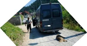 Poliţia din Săcele îl caută pe bărbatul care a târât un câine legat de dubă