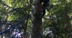 Parapantist turc, blocat într-un copac la Săcele