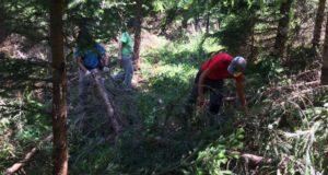 Traseul dintre Valea Gârciniului și cabana Bunloc a fost curățat și marcat