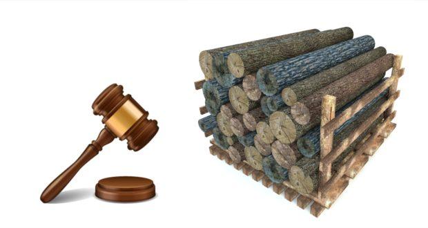 Regia Pădurilor Săcele organizează licitaţie intermediară pentru vânzarea de masă lemnoasa pe picior